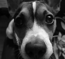 dog-face by GETZ