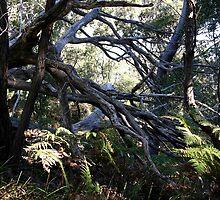 Tangled woods by Tammy Serdiuk