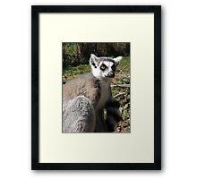 Furry Stripey Nomad Framed Print
