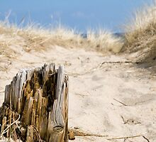 Old Piling in the Sand by JKunnen