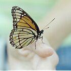 Viceroy Butterfly by sunsetgirl