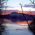 Ducks at dusk by Braedene