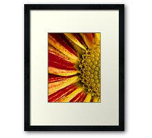 Autumn Says Hello.  Framed Print