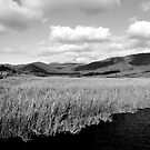 River by Catherine Davis