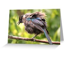 Tui......OK,  what comedian stole my other leg......? Greeting Card
