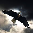 Eagle Storm by Val  Brackenridge