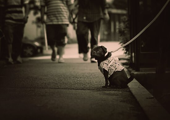 Cute dog with attitude, Tokyo, Japan by Alfie Goodrich