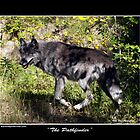&quot;The Pathfinder&quot; Grey Wolf Photography by Val  Brackenridge