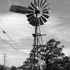 Windmill Black and White by terriP