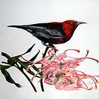 Scarlet Honeyeater by Bob  Thompson