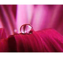 PINK Collection for the Cure - Pink reflections Photographic Print