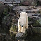 Polar Bear Rock (Berlin)  by CreativeEm