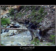 CANYON WOLF by Skye Ryan-Evans