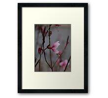 Autumn flower 2 Framed Print