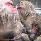 snow monkeys 3 by Rhona