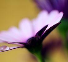 Colour Of Life XXXVI by Damienne Bingham