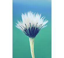 natural brush Photographic Print