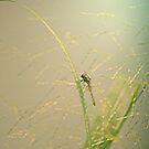 dragon flie by Amagoia  Akarregi