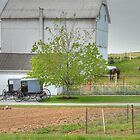 An Amish Farm by Dyle Warren