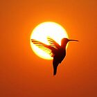 Silhouette of a Hummingbird by Karen Keaton