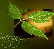 Emerging . . . by Rosalie Dale