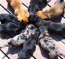 Puppy Chow by Tamara Valjean