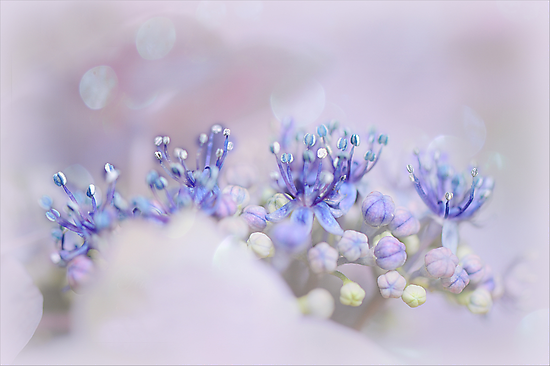 Nature's little Tiara by Jacky Parker