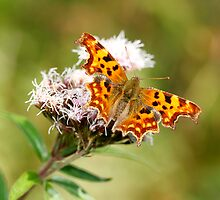 Comma by Brian Haslam