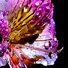 Candy Droplets by funkyfacestudio