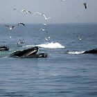 feeding whales & birds by Peter Cook