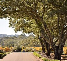 Drive through the vineyard by smilinginsonoma