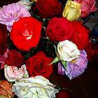 Roses Year Round by Mariam Muradian