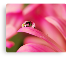 PINK Collection for the Cure - Reflecting Tears  Canvas Print