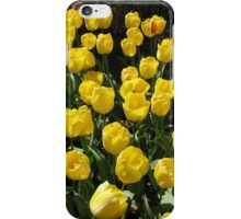 Golden Dreams - Tulips in the Keukenhof Gardens iPhone Case/Skin