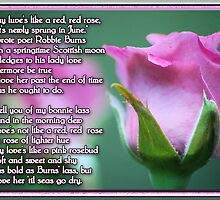Pink Love Rose by Donna Adamski