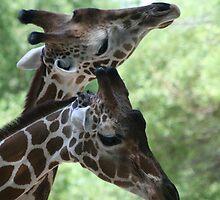 Reid Park Zoo by RichImage