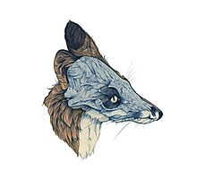 Snowmine - Laminate Pet Animal Photographic Print