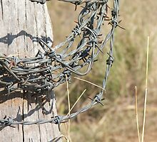 Roll Of Barbed Wire by Cherie Carlson