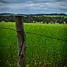 Wheatbelt by Damiend