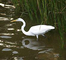 Egret Wonder by kimbarose