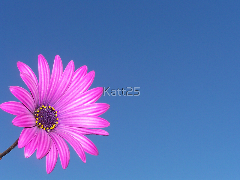 .: Pink and Blue :. by Katt25