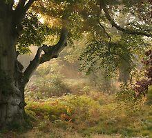 Autumn by Graham Ettridge