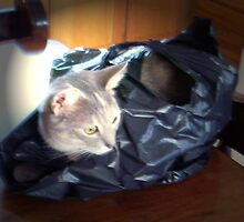 Cat in a Bag by Terry Schock
