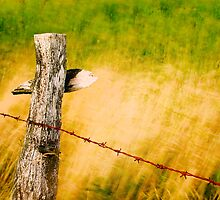 fence in the wind by imaginaryfriend