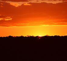 Orange Glow by Laurie Puglia