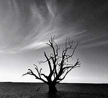 Tree of the Past by Cindy Hitch