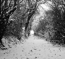 Lane in the snow by Jacqueline Moore