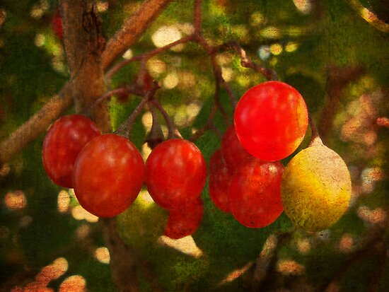 Red little berries by ©Maria Medeiros