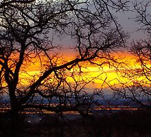 Chico Sunset by Nikki Collier