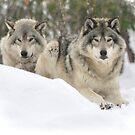 My Heart belongs 2 U - Timber Wolves by Poete100